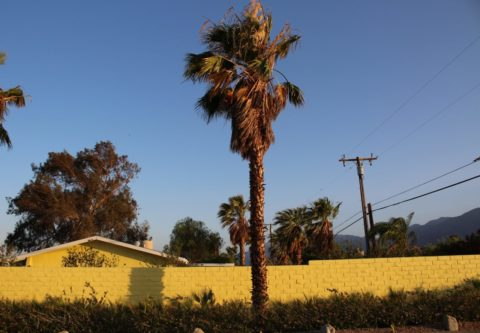 Palm Springs Yellow Wall